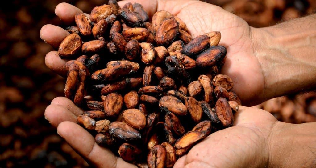 cacao history