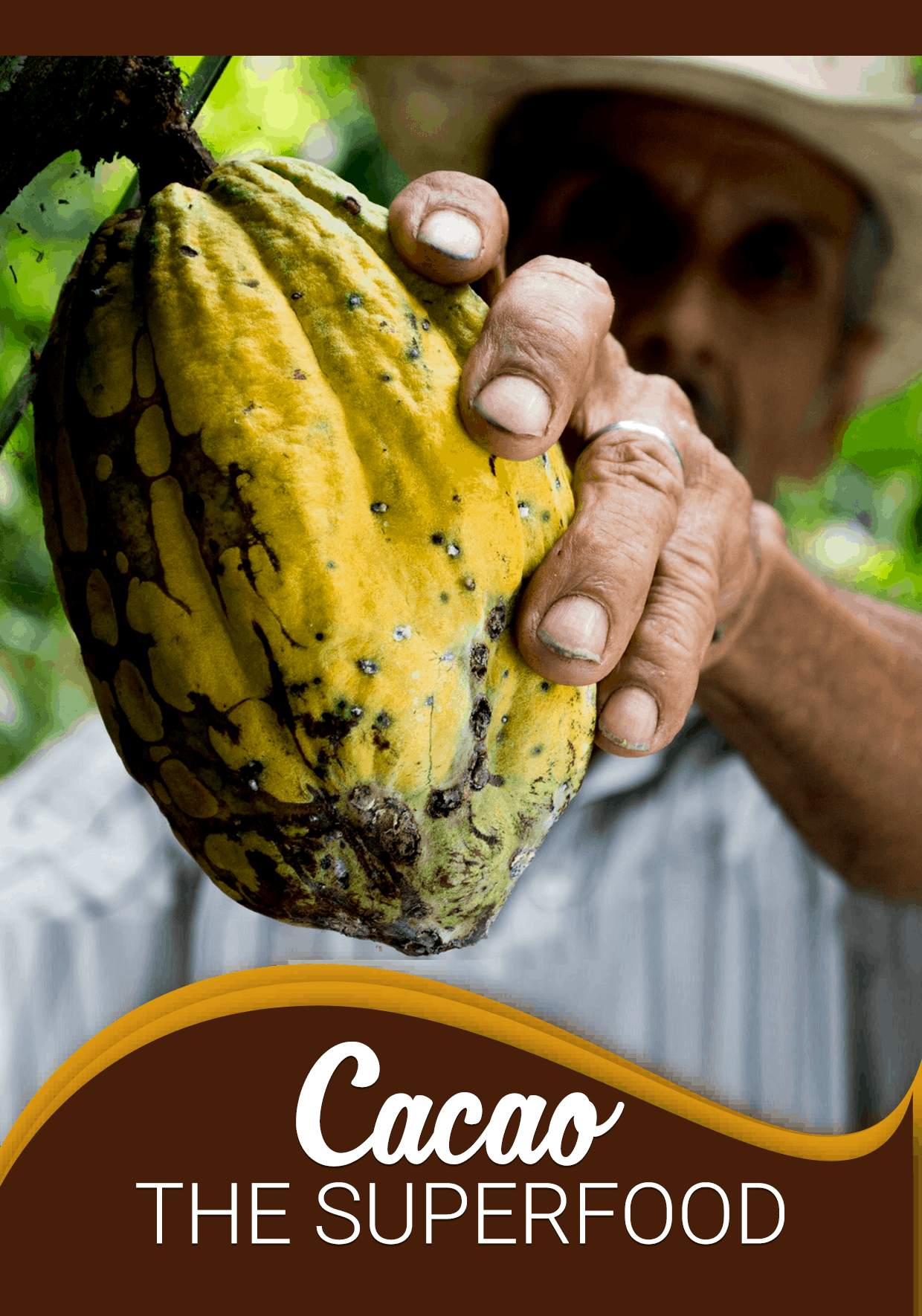 Cacao-The-Superfood